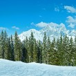 Winter mountain fir forest panorama — Stock Photo #36290849