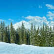 Winter mountain fir forest panorama — Stock Photo