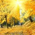 Family in autumn sunshine maple park — Stock Photo #36295691