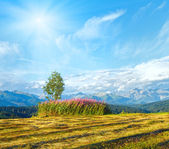 Sunshine above summer mountain country mown field — Stock Photo