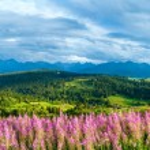 Summer mountain country panorama (Gliczarow Gorny, Poland) — Stock Photo #36789975
