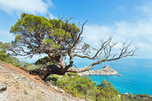 Coastline of Novyj Svit summer view (Crimea, Ukraine) — Stock Photo