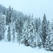 Winter mountain misty forest. — Stock Photo