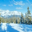 Winter mountain fir forest landscape ( Austria)) — Stock Photo #37444569