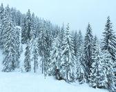 Winter mountain misty forest. — Stock Photo