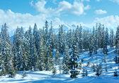 Winter mountain fir forest landscape — Stock Photo