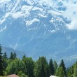 Stock Photo: Herd cows on glade and Mont Blanc mountain massif (view from Pla