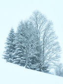 Winter mountain misty snowfall landscape — 图库照片