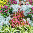 Autumn flowerbed composition — Stock Photo #40067689