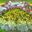 Stock Photo: Autumn flowerbed composition