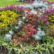 Autumn flowerbed composition — Stock Photo