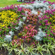 Autumn flowerbed composition — Stock Photo #40068551