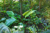 Subtropical plants in summer city park grove — Stock Photo