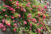 Planta de flor vermelha — Foto Stock