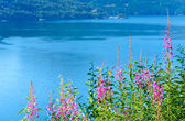 Fjord summer hazy view (Norway) — Stock Photo