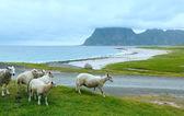 Haukland beach summer view (Norway, Lofoten). — Stock Photo
