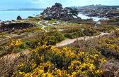 Ploumanach coast spring view (Brittany, France) — Stock Photo