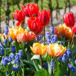 Multicolored flowers on spring flowerbed. — Stock Photo
