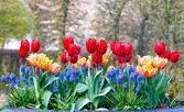 Flores multicoloridas no canteiro de flores de primavera. — Fotografia Stock