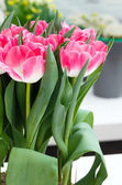 Pink tulips bouquet  — Stock Photo