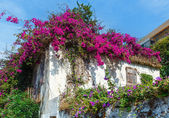 Flowering tree on the roof — Foto Stock
