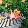 Rake and leaves — Foto Stock