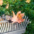 Rake and leaves — Stockfoto