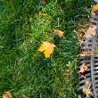 Rake and leaves — Stock Photo