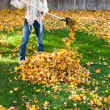 Autumn chores — Stockfoto