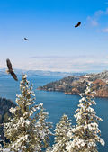 Coeur d Alene Idaho — Stock Photo