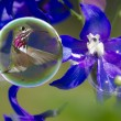 Stock Photo: Humming birds in bubbles