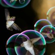 Humming birds in bubbles — Stock Photo