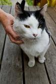 Petting the cat — Stock Photo