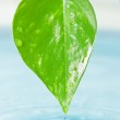 Green leaf and water — Stock Photo #31972481