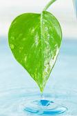 Zelený list a voda — Stock fotografie