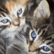 Kitten eyes — Stock Photo