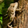 Tree lizard — Stock Photo
