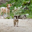 Jungle puppies — Stock Photo