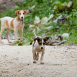 Stock Photo: Jungle puppies