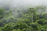 Tropical rain forest — Stock Photo