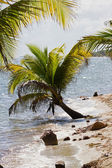 Belize, plage tropicale — Photo