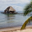 Tropical Belize — Stock Photo #37454479