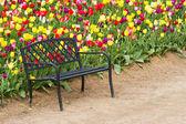 Beautiful tulip farm — Stock Photo