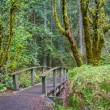 Natures hiking path  — Stock Photo #45717755