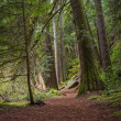 Natures hiking path — Stock Photo #45717781