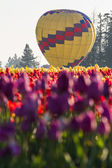 Hot air balloon ride over the tulips  — Stock Photo