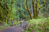 Natures hiking path  — Stock Photo