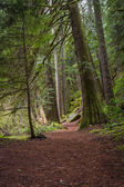 Natures hiking path  — Foto Stock