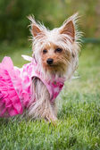 Adorable puppy in pink — Stock Photo