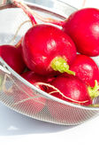Fresh clean radishes  — Stock Photo